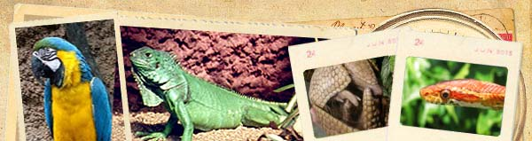 amazon world zoo park isle of wight tourist attraction